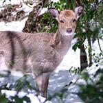 2006年の鹿児島・屋久島旅行をふりかえってみた