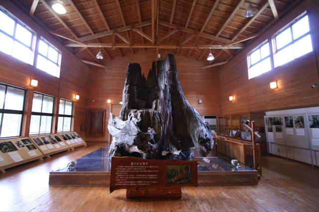 2006年鹿児島・屋久島の旅 ③  (2006年3月14日・屋久島2日目) 国内旅行
