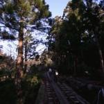 2006年鹿児島・屋久島の旅 ④  (2006年3月15日・屋久島3日目) 国内旅行